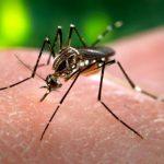 Médico fala sobre Zika vírus e a Síndrome de Guillain-Barré